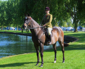 Sharyl Horley Balanced Horse Feeds
